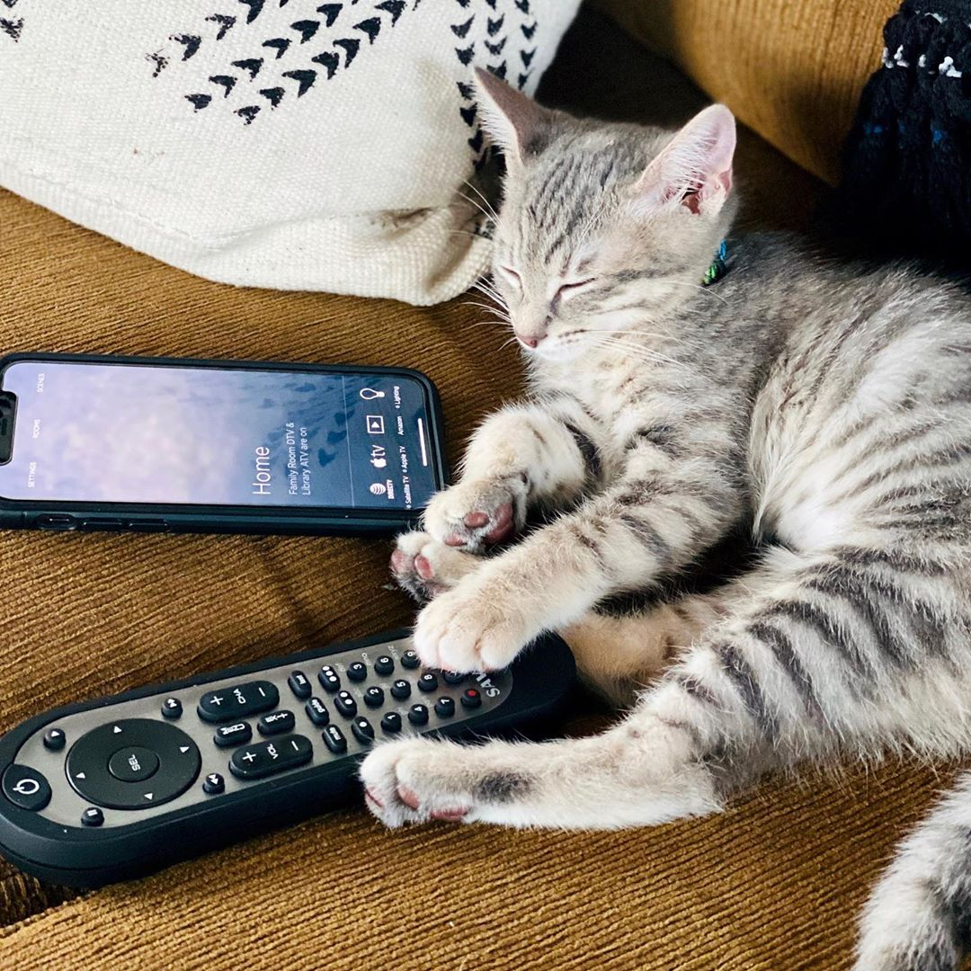 Some homeowners think a control system may be too complex for them. Well...they're wrong. . Even cats can do it. . The Savant Pro Remote gets plenty of limelight but sometimes the Savant Button Remote is the ideal solution!