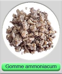 Gomme Ammoniacum