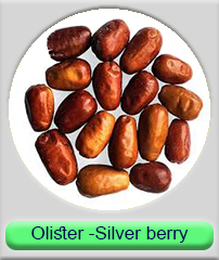 olister silver berry