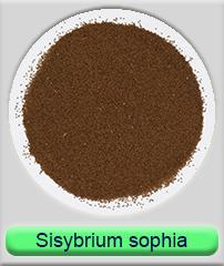 sisybrium sophia