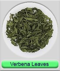 verbena leaves