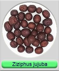 ziziphus jujuba