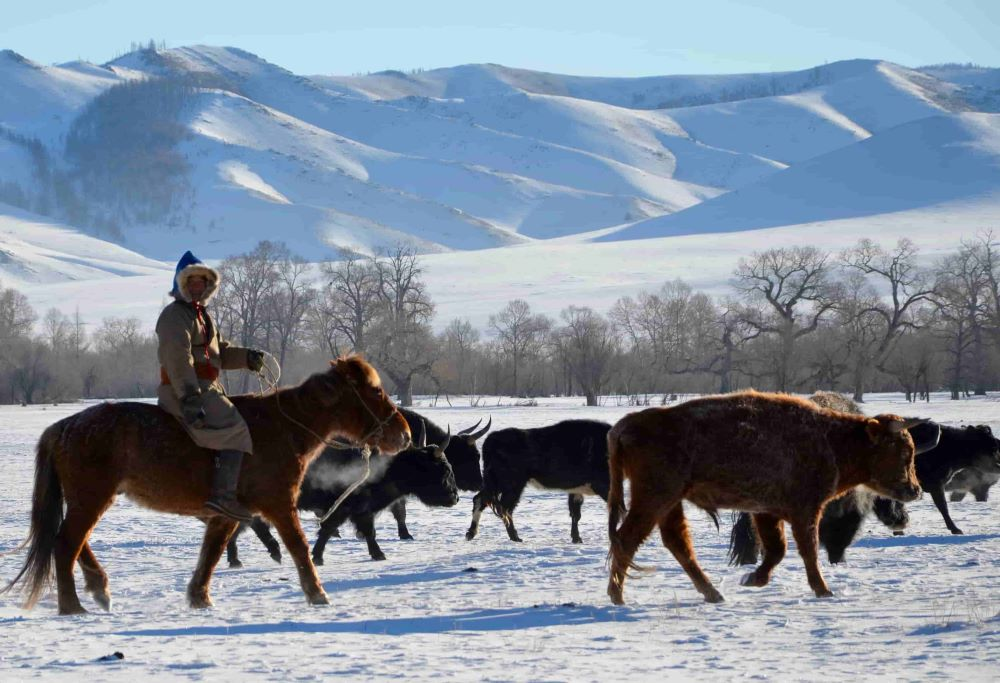 outer mongolia horse rider