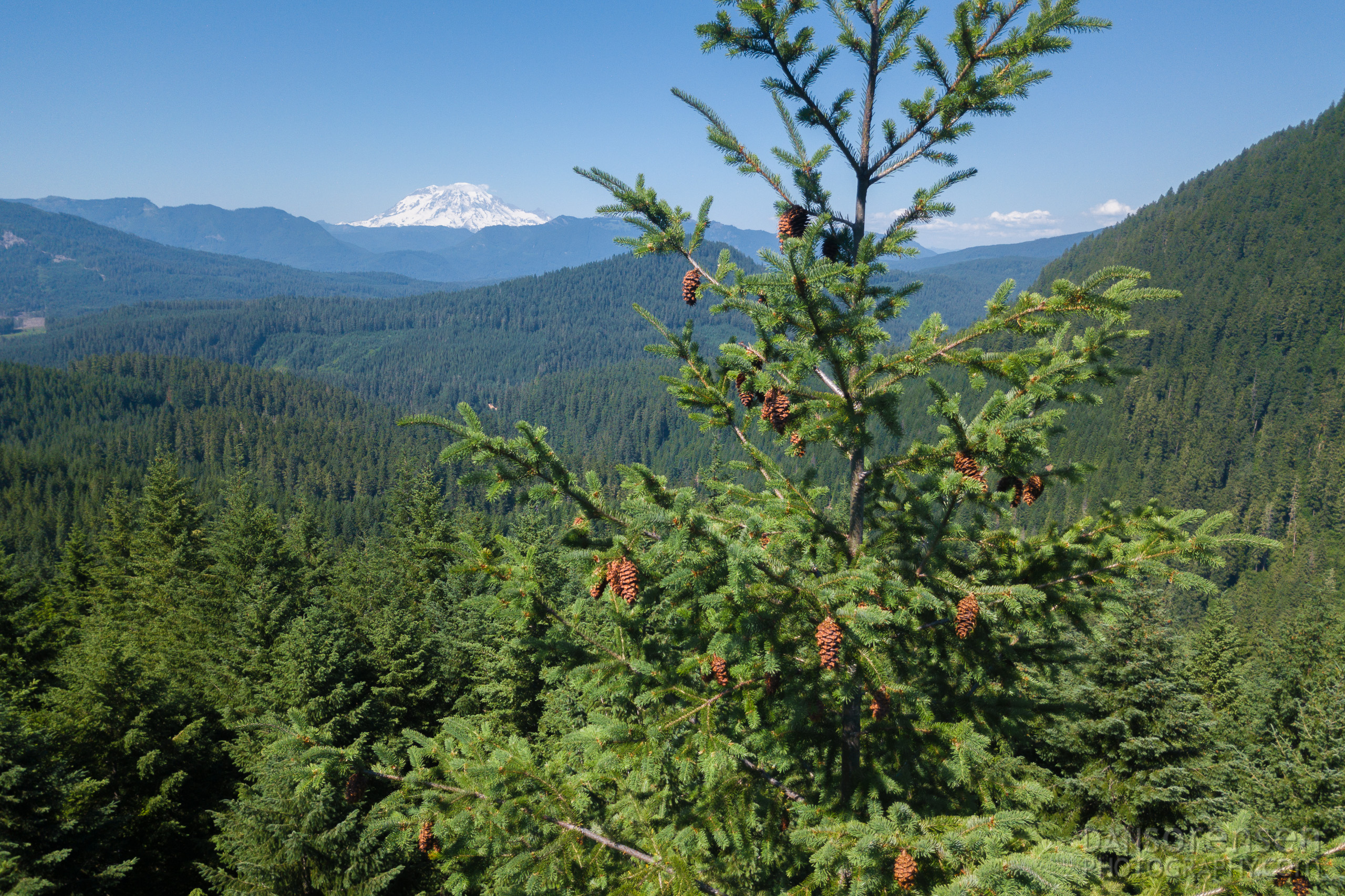 Mount Rainier from the Tree Tops
