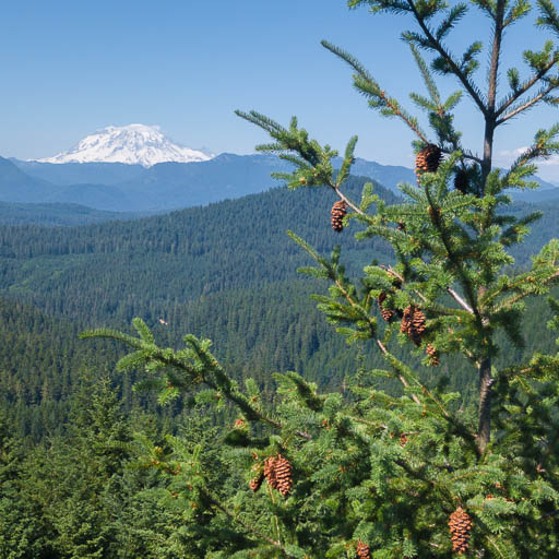 Mount Rainier from the Tree Tops