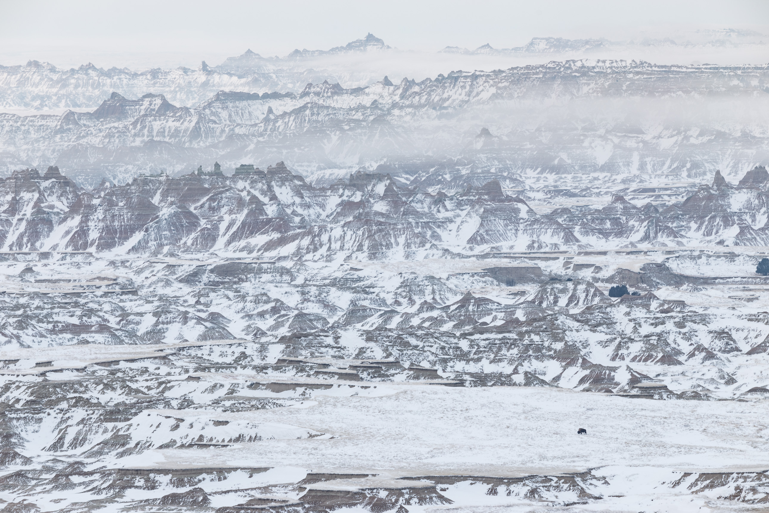 Lone Bison Grazing in Badlands National Park