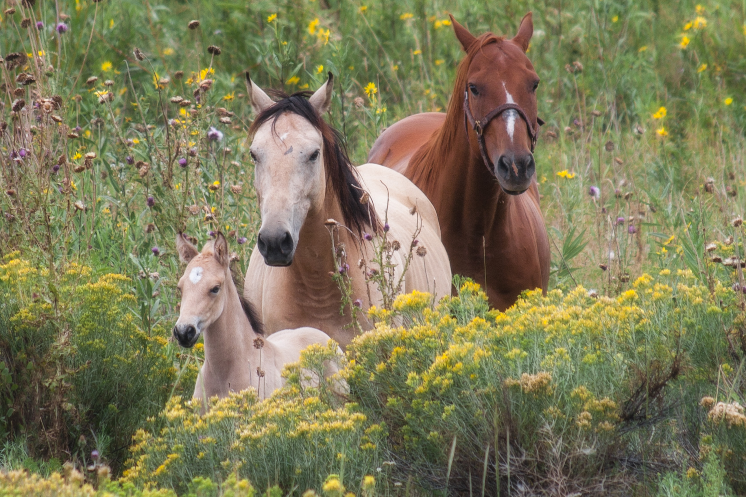 Horse family in Colorado