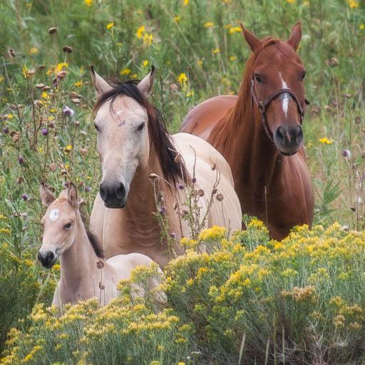 Horse family in Colorado