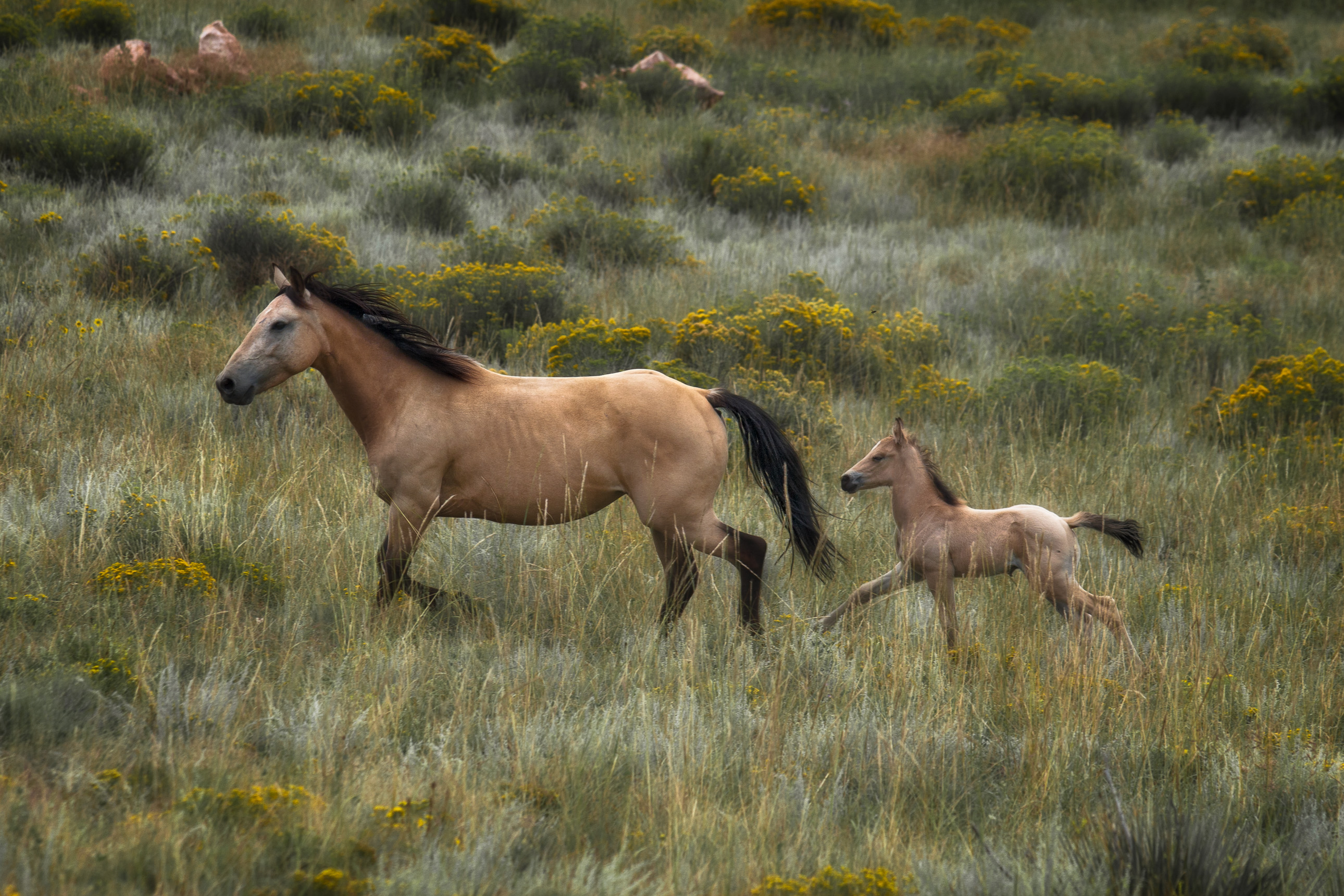 Mother and baby horse on a ranch in Colorado