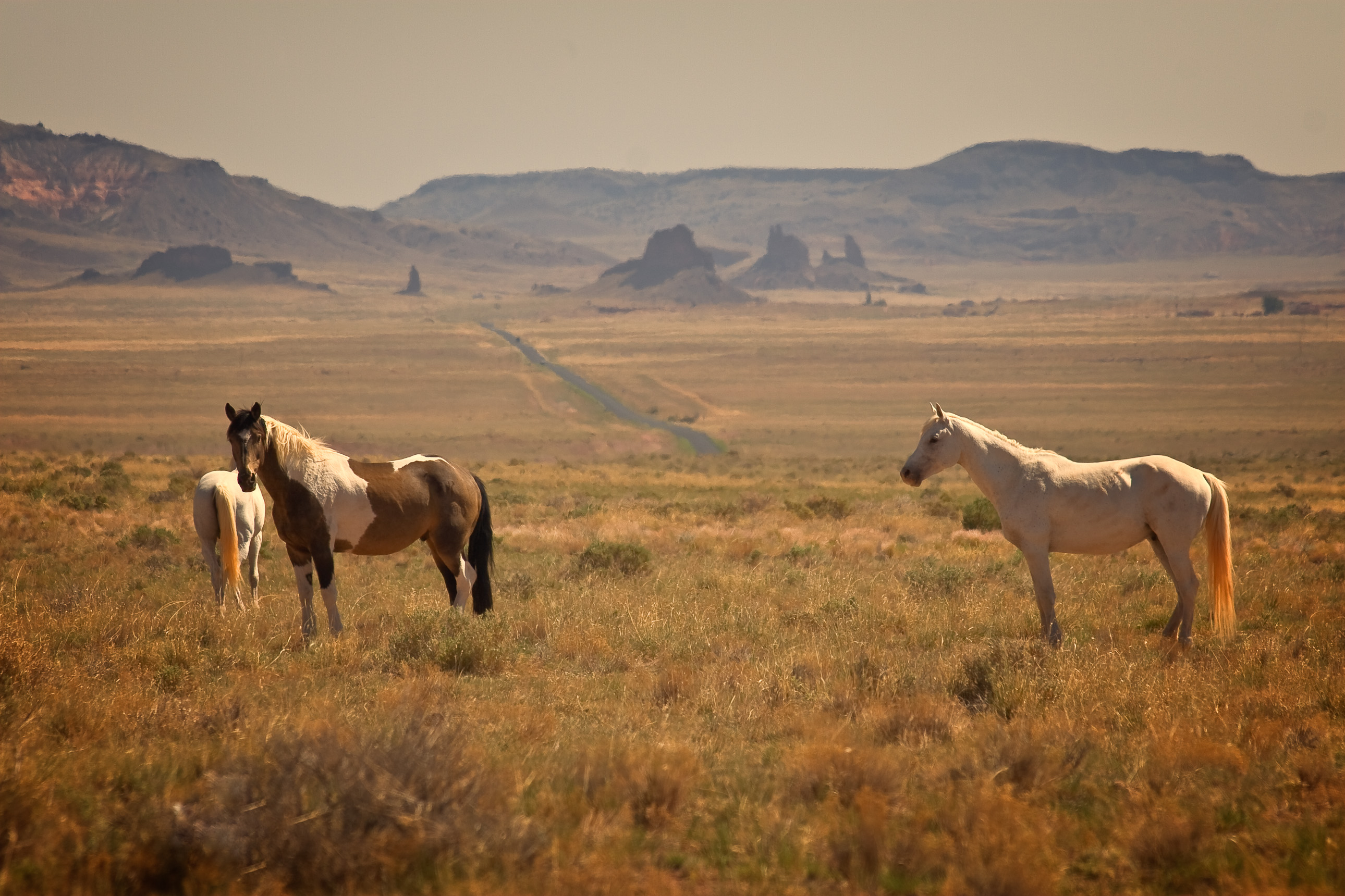 Navajo horses near Winslow Arizona