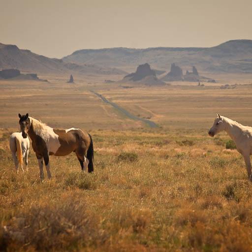 Navajo horses near Winslow Arizona