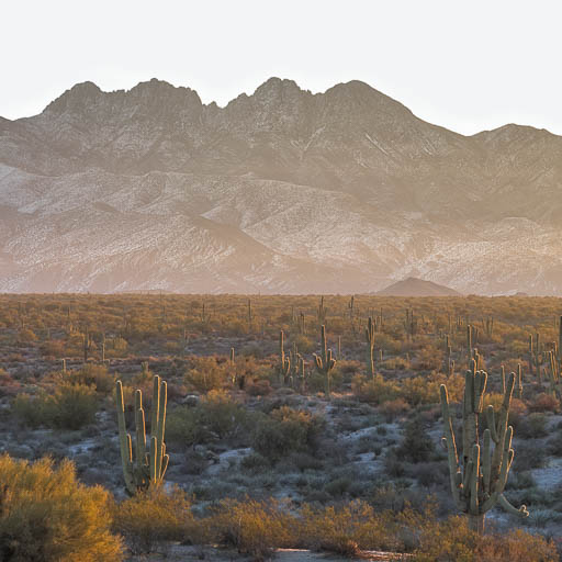 Four Peaks with Snow at Sunrise