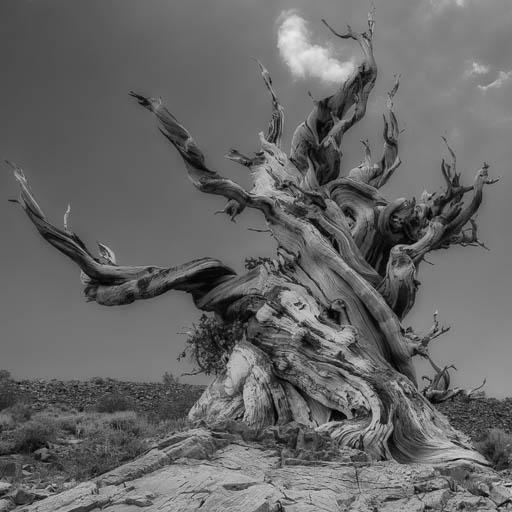 Ancient Bristlecone Pine Forest in California