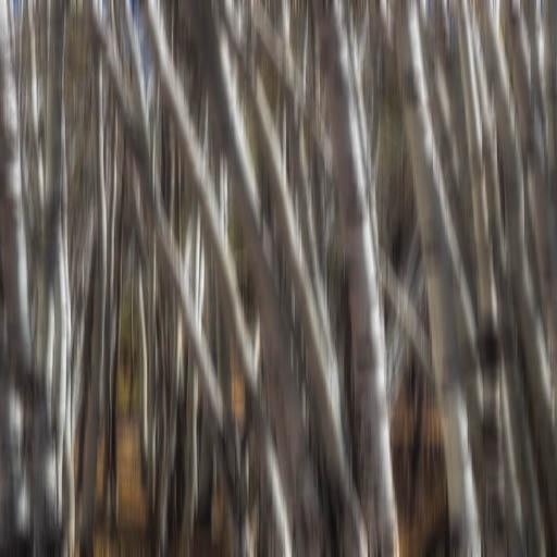 Blurred aspen trees