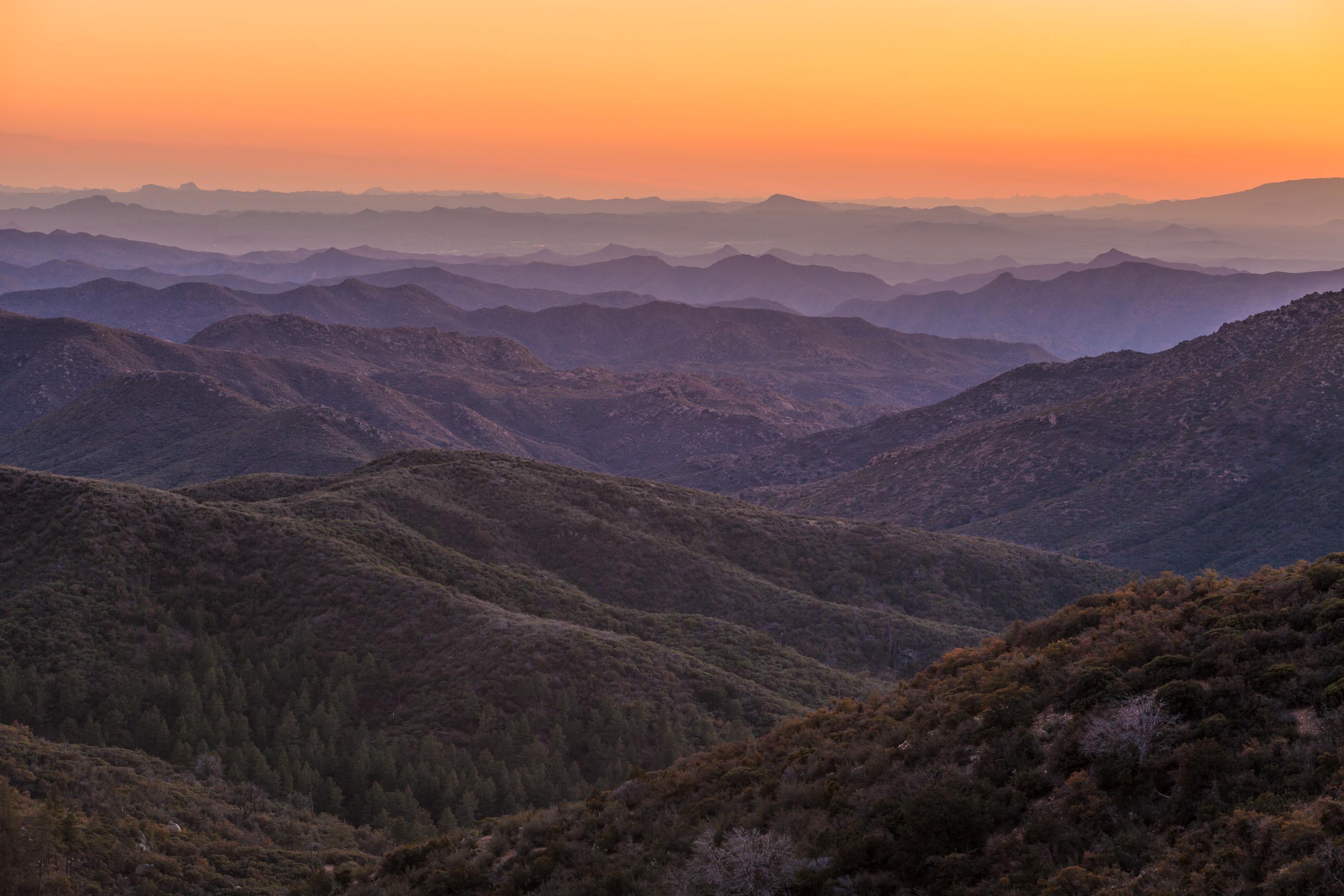 Purple Bradshaw Mountain Majesty