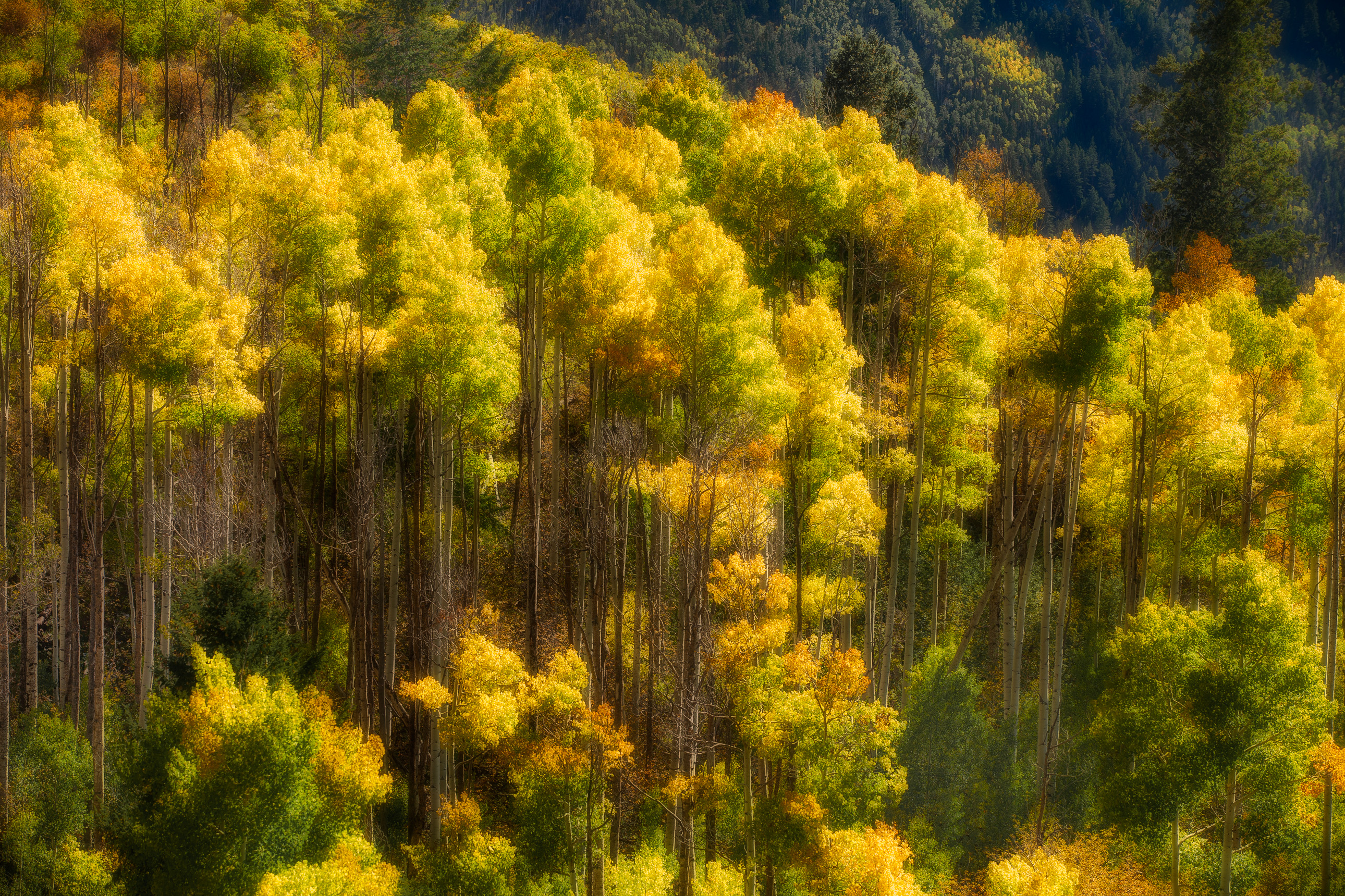 Fall color in Curecanti National Recreation Area