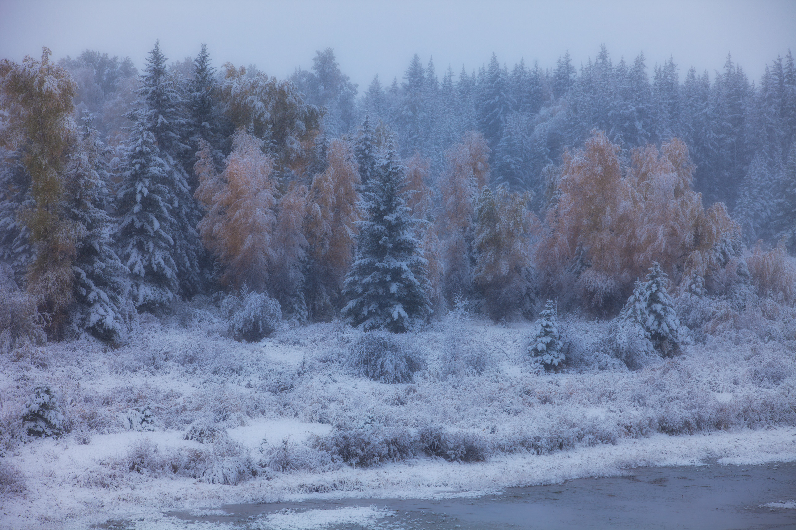 Snow on fall color in Wyoming