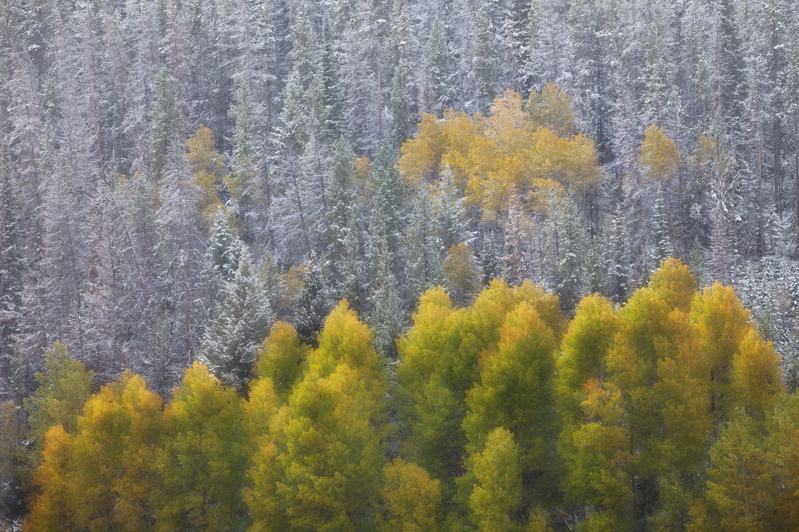 Fall color amongst snow-kissed trees