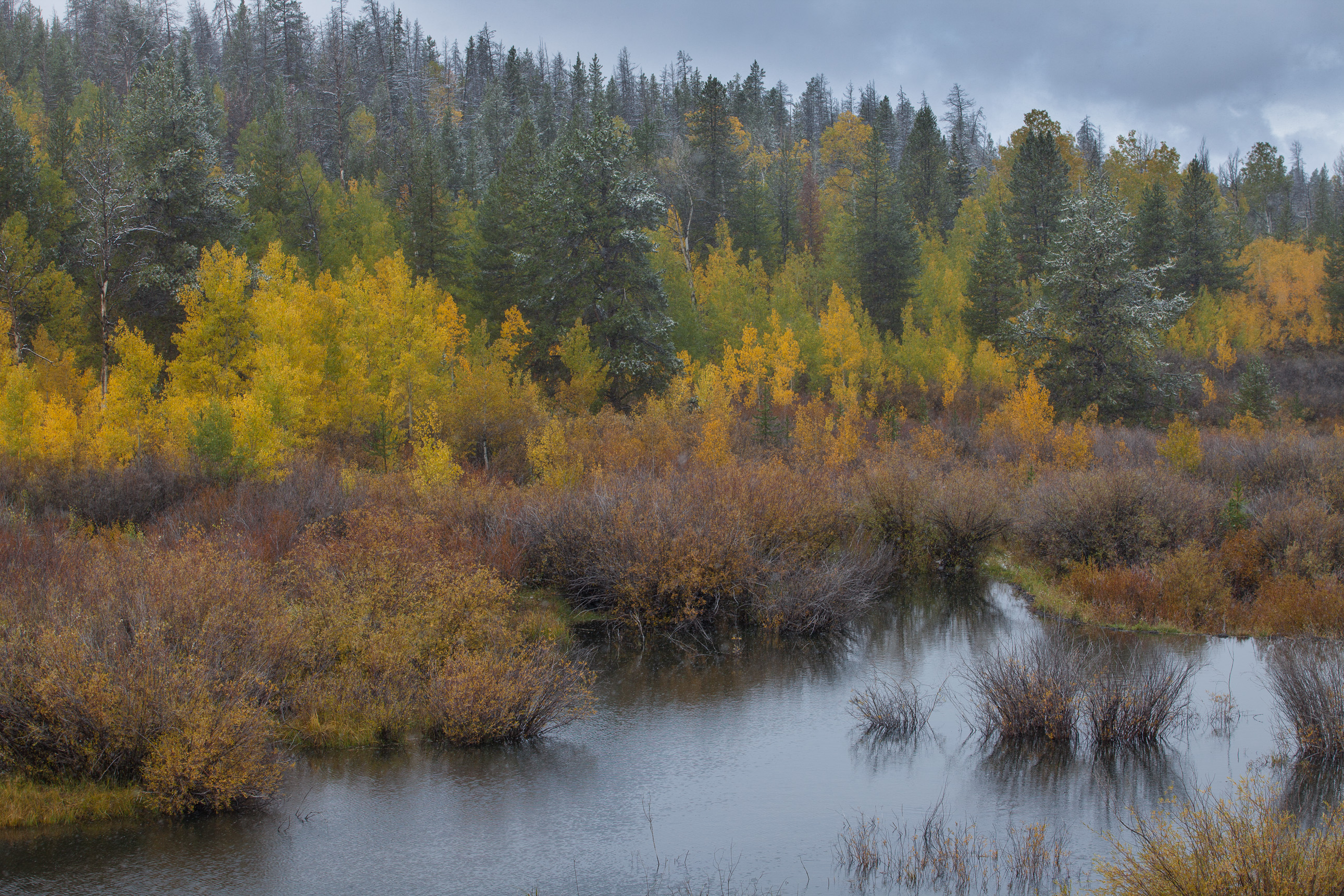 Fall color and a dusting of snow in Wyoming