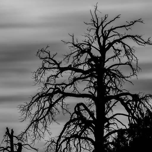 Dead tree silhouette near Ashurst Lake