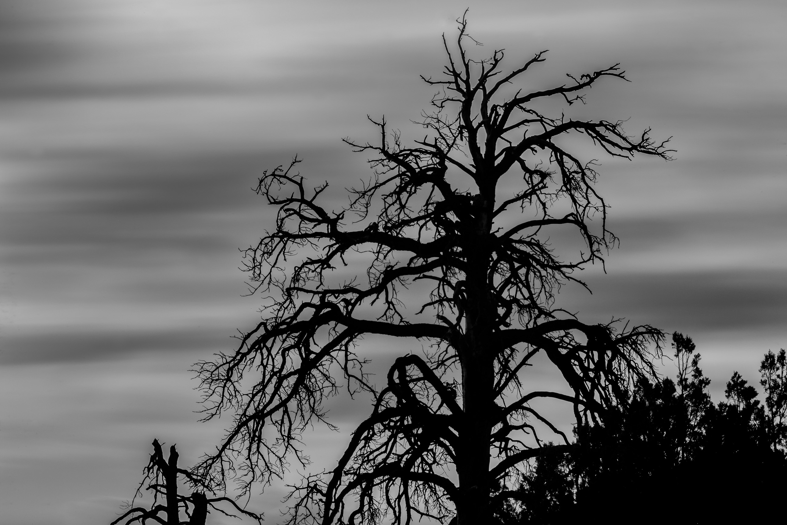 Dead tree silhouette near Ashurst Lake