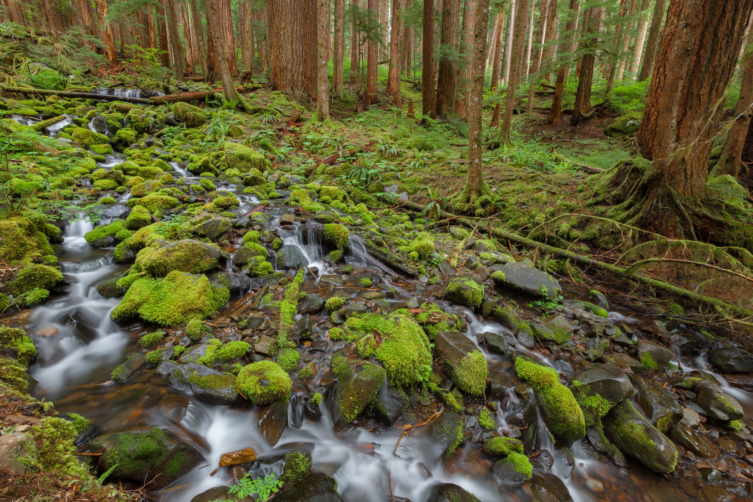 Rainforest stream in Olympic National Park