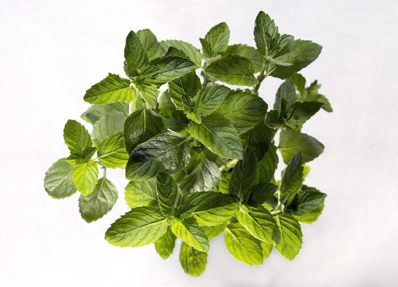 Spearmint Tea is beneficial for Polycystic ovarian sydrome (PCOS)