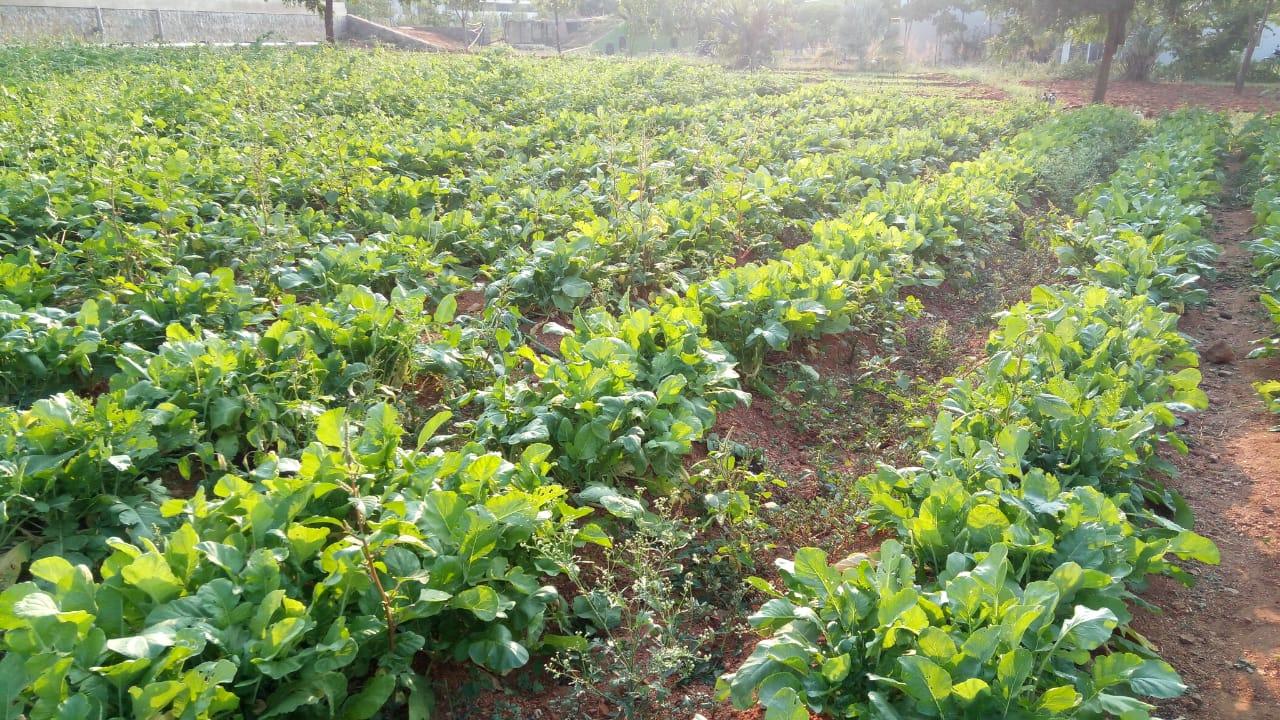 Organo's Organic Farming
