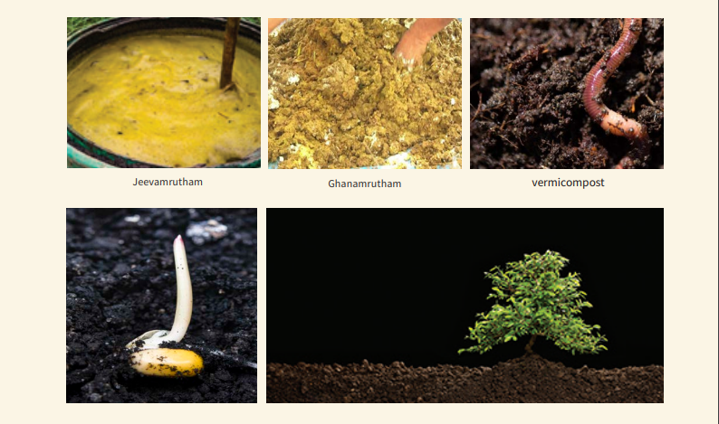 organic jeevamuratham