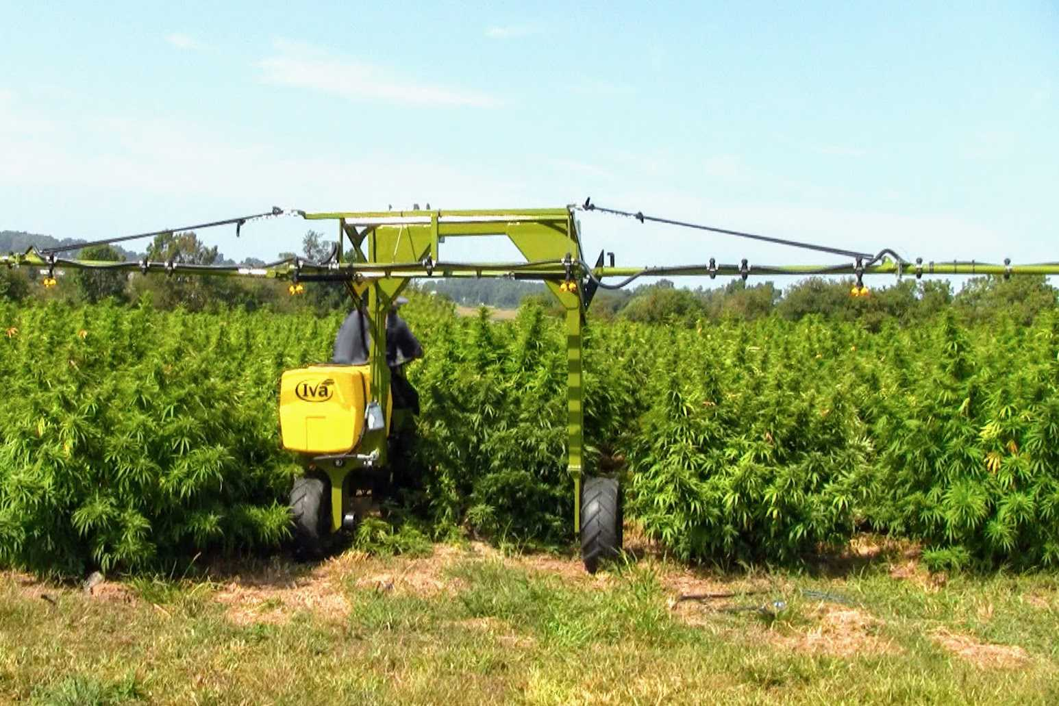 spraying hemp with SP50 Self-propelled sprayer from Iva Mfg