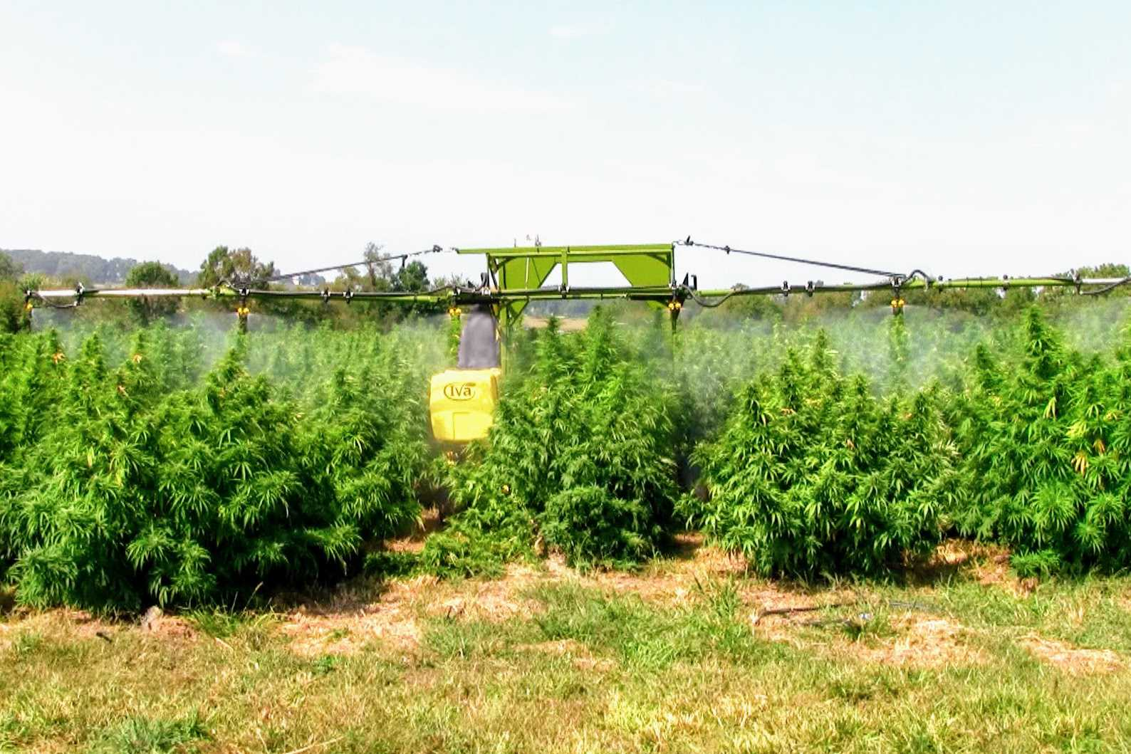 SP50 Self-propelled Sprayer in CBD hemp field