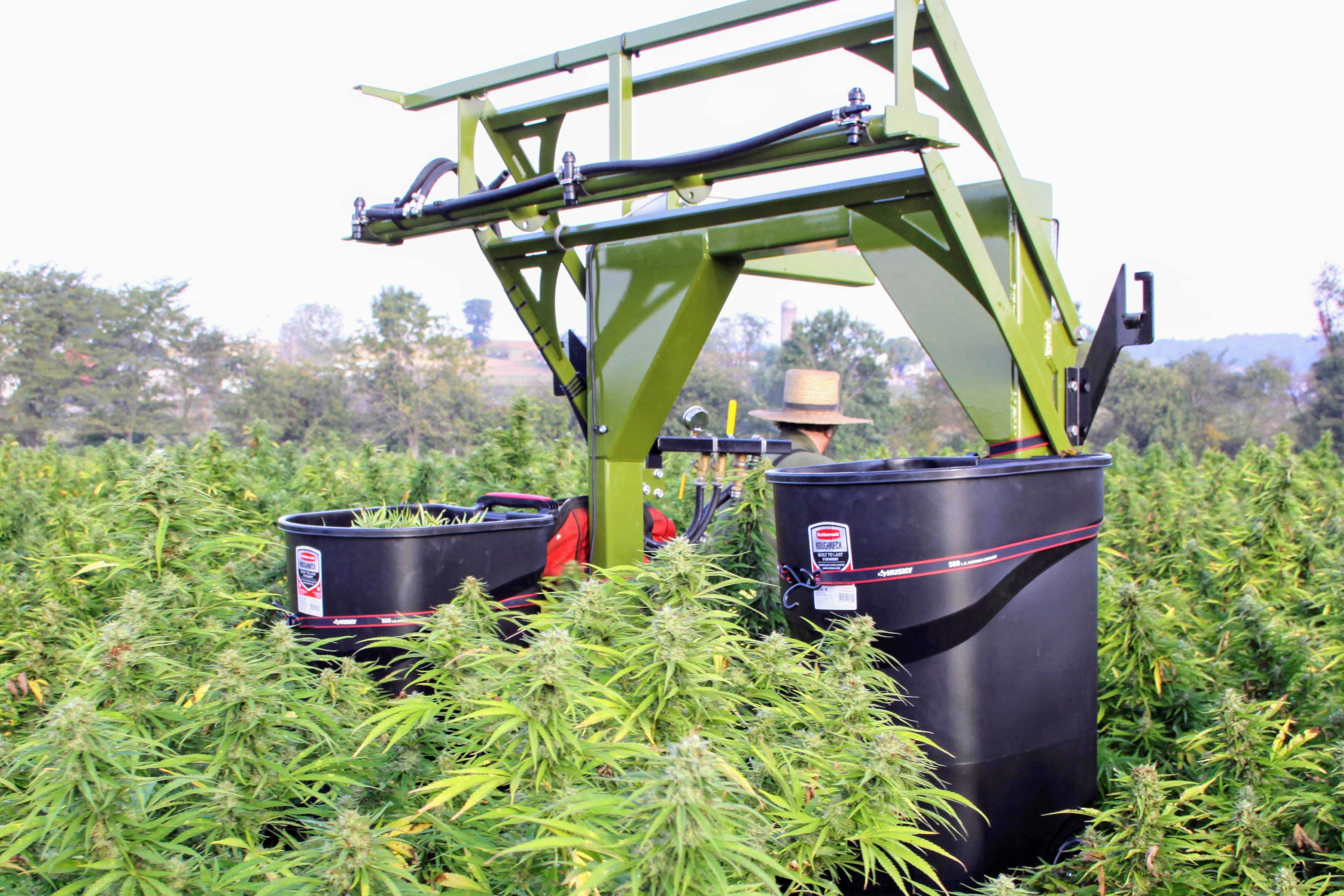 harvesting hemp with SP50 Self-propelled sprayer from Iva Mfg