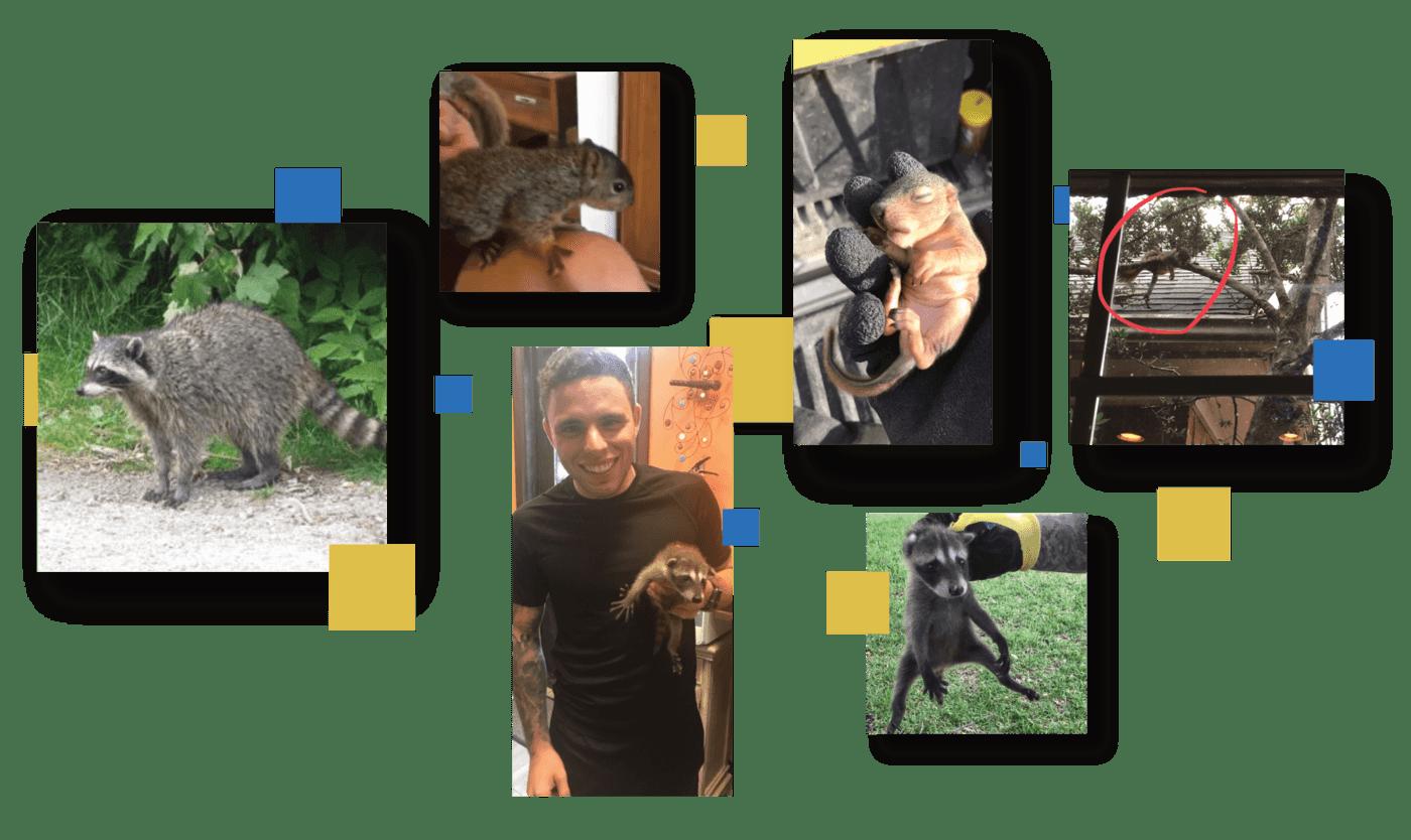 rehabilitated animals