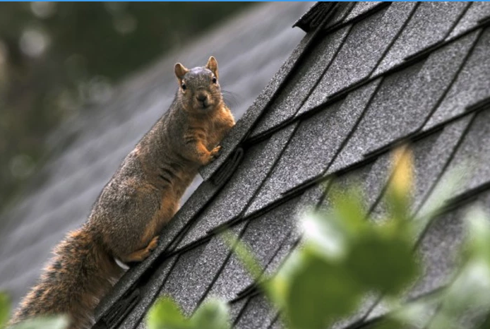 Some plants are natural squirrel repelent.