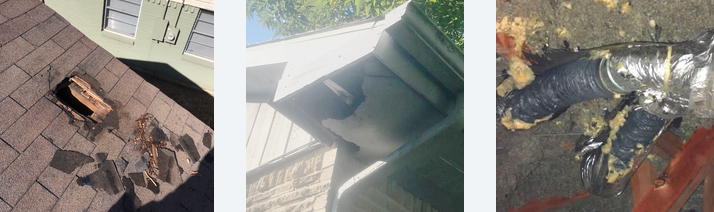 Structural damage caused to a Dallas area home caused by a Raccoon infestation.