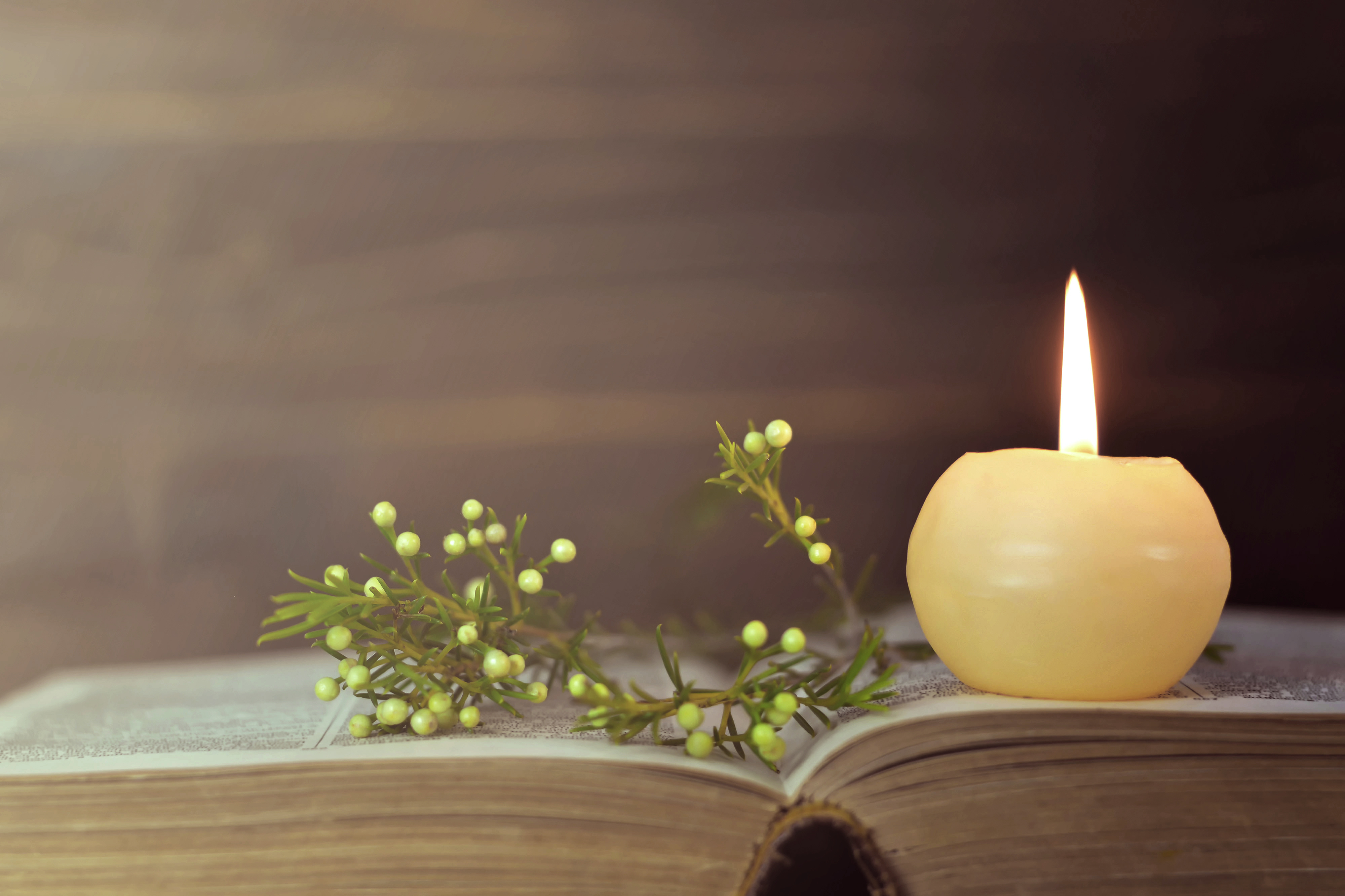 A candle and flower resting upon an open book.