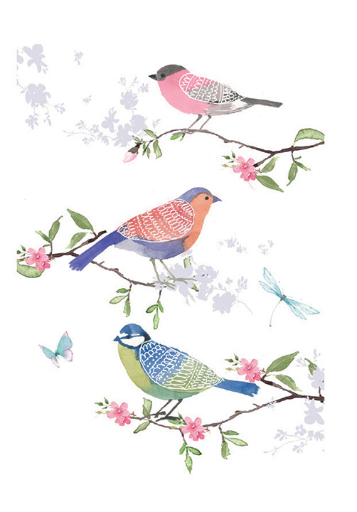 A fine art illustration of three garden birds, on blossom covered twigs against a white background