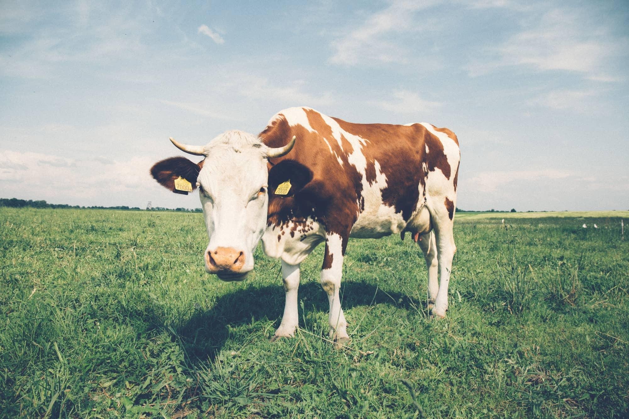 Intruder Vulnerability Bulletin — Dirty COW Privilege Escalation