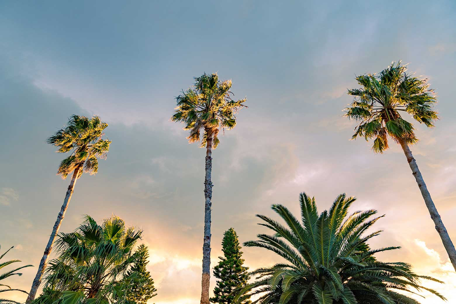 Vibrant palm trees against a backdrop of sunlit clouds.