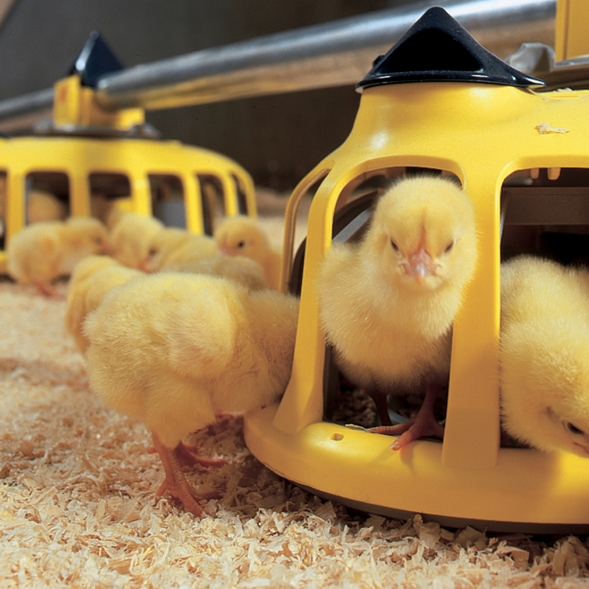 Climatec Systems - Poultry Equipment Image