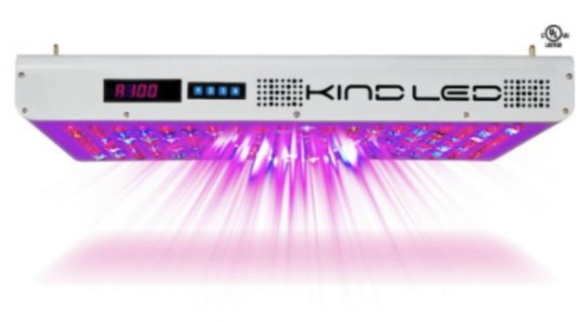 KIND LED Blurple fixture