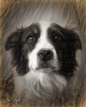 Pet Portrait Digital Charcoal Style