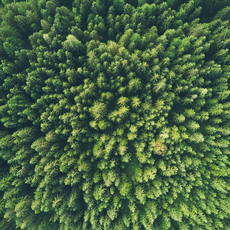 A green forest from above