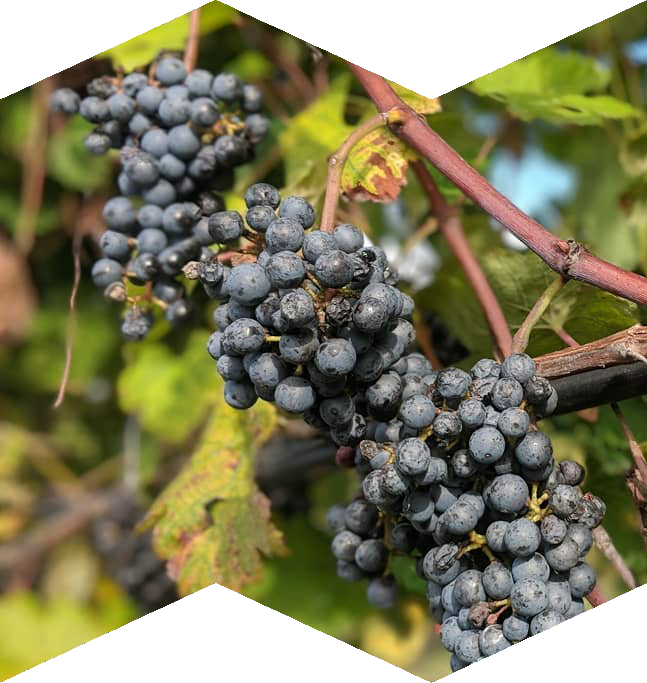 Kansas City Wineries Map