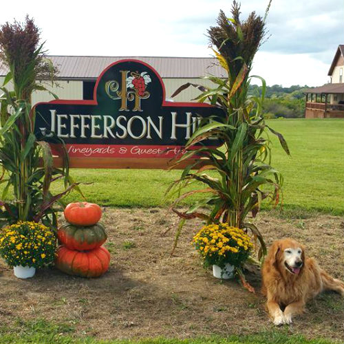 Jefferson Hill Vineyard