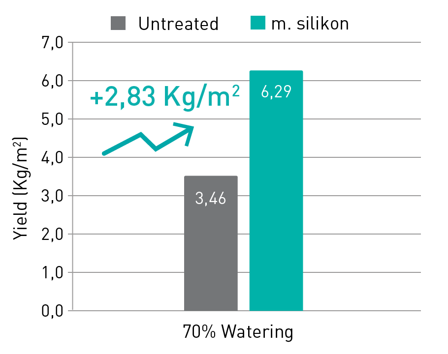 increase melon production manvert silikon