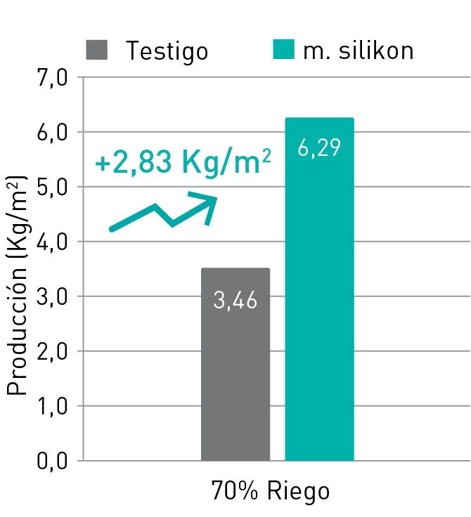 aumento producción calabacín manvert foliplus