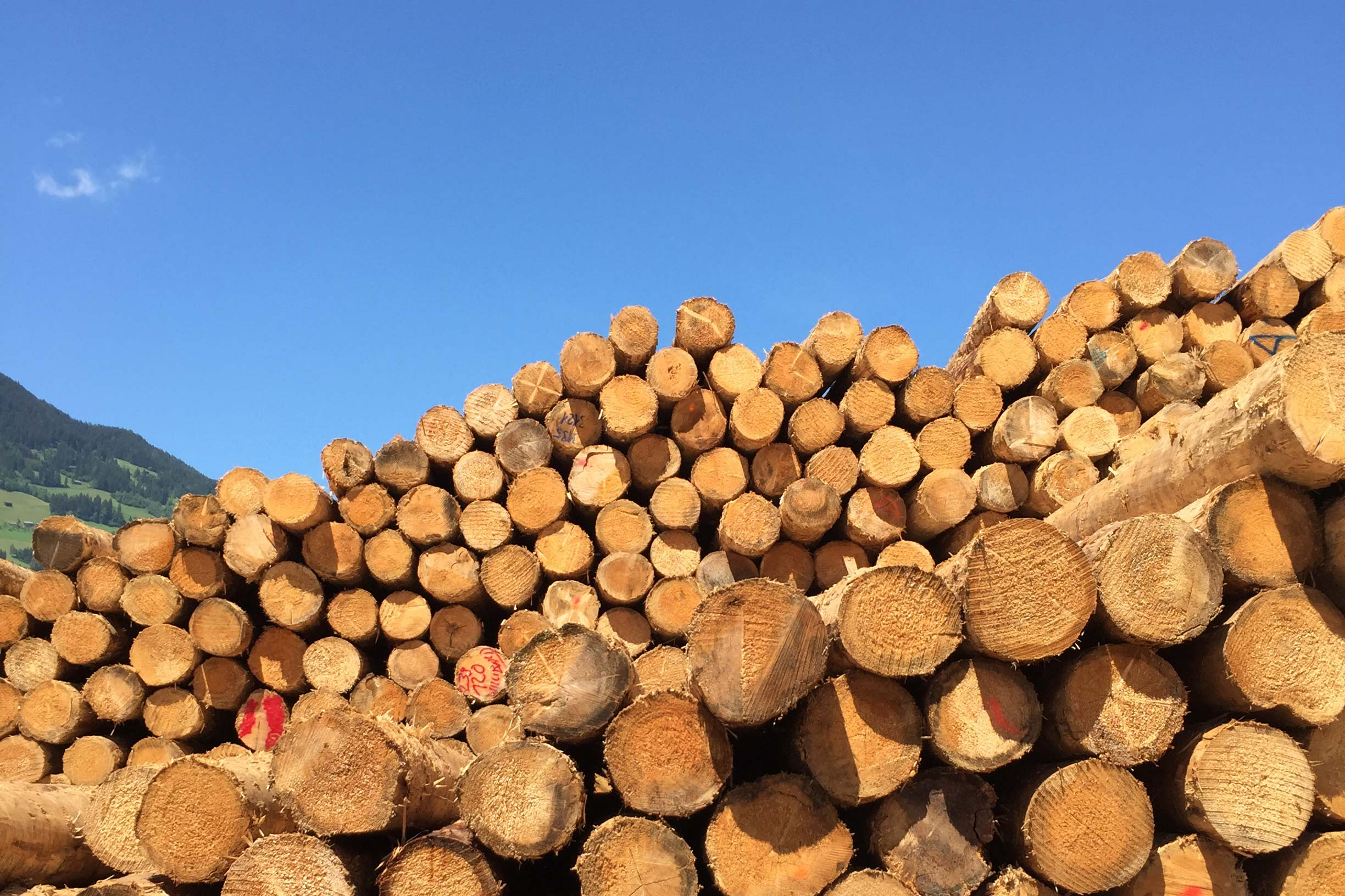 Softwood logs stacked up at the timber yard that has been sourced sustainably