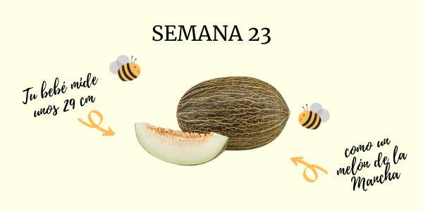 semana 23 embarazo