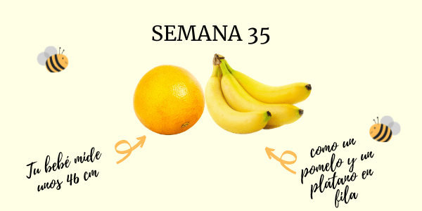 semana 35 embarazo
